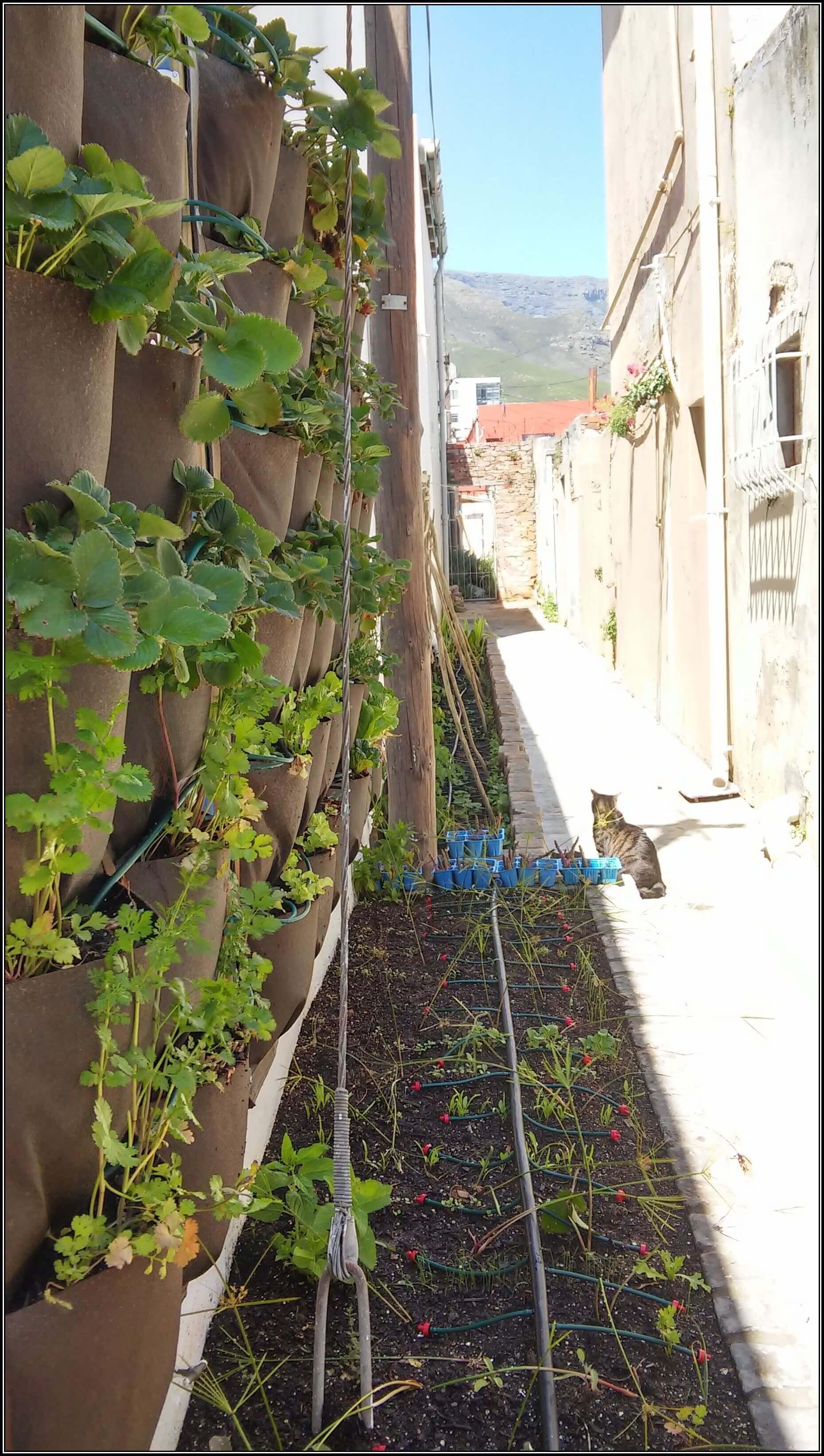 Alleyway-garden